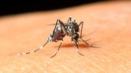 Rum Kesimi'nde bir Batı Nil Virüsü vakası daha