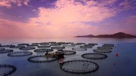 Rum Kesimi'nde balık üretme çiftliği patladı