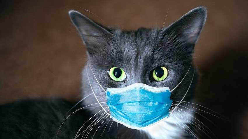 Dünya bunu da gördü! Koronavirüs taşıyorlar diye kediler itlaf edildi