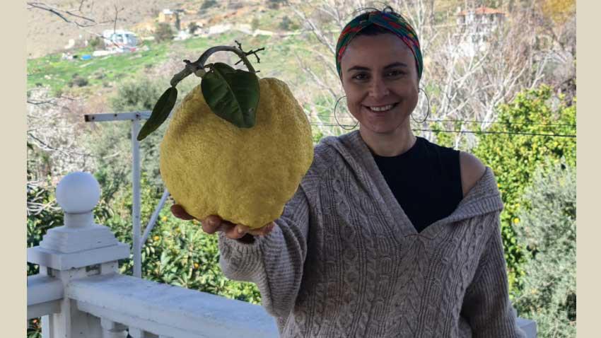 KKTC'de dev limon! Kaç kilogram geldi? Mezatta satılacak